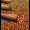 Kép 2/2 - Diadem MAT-25 varjúháj szőnyeg