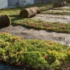 Kép 1/3 - Sedum szőnyeg GreenTech