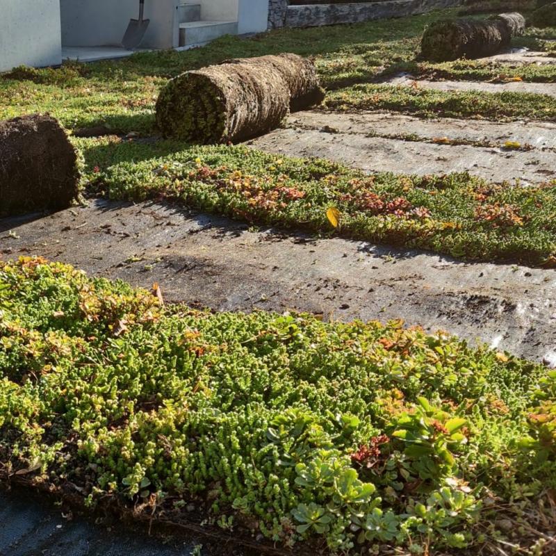 Sedum szőnyeg GreenTech